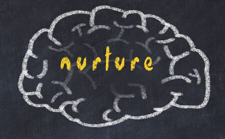 Drawing of human brain on chalkboard with inscription nurture.