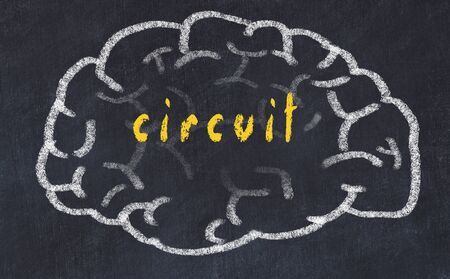 Drawing of human brain on chalkboard with inscription circuit.