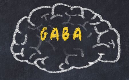 Drawing of human brain on chalkboard with inscription GABA.