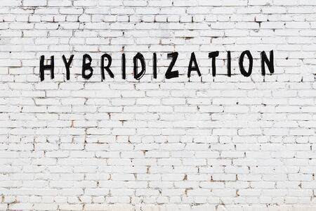 Word hybridization written with black paint on white brick wall.