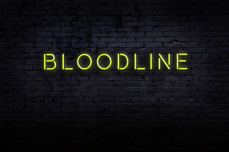 Neon sign with inscription bloodline against brick wall. Night view