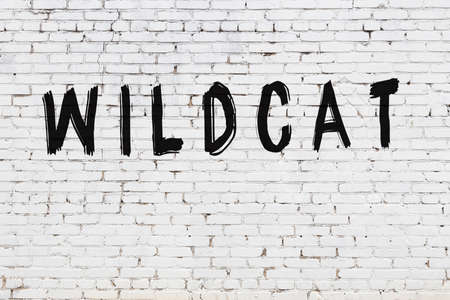 Inscription wildcat written with black paint on white brick wall.