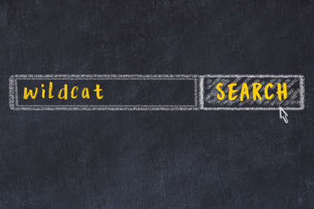 Drawing of search engine on black chalkboard. Concept of looking for wildcat