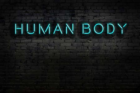 Neon sign on brick wall at night. Inscription human body