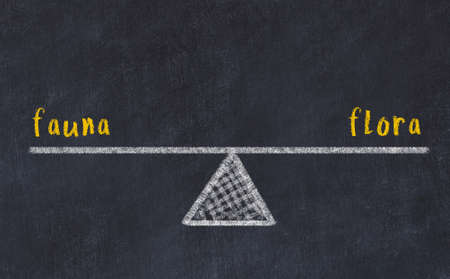 Chalk drawing of scales with words fauna and flora on black board. Concept of balance