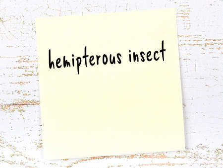 Concept of reminder about hemipterous insect. Yellow sticky sheet of paper on wooden wall with inscription