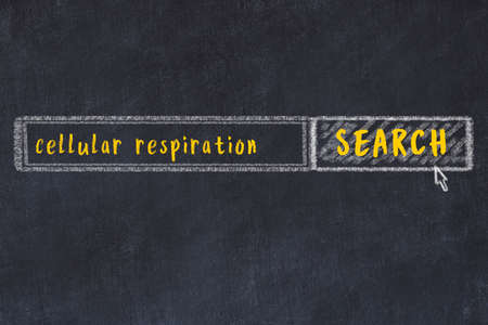 Concept of searching cellular respiration. Chalk drawing of browser window and inscription