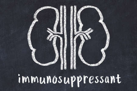Chalk drawing of human kidneys and medical term immunosuppressant. Concept of learning medicine.