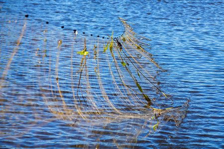 Fishing nets get out of the water on river  photo