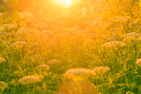 Flowers and grass in the sunlight  photo