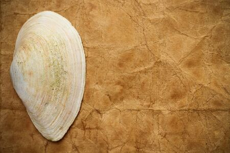 Sea shell on vintage paper background Conceptual and symbolic background.