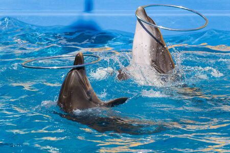 Dolphins play in the water, with space for an inscription or text, background