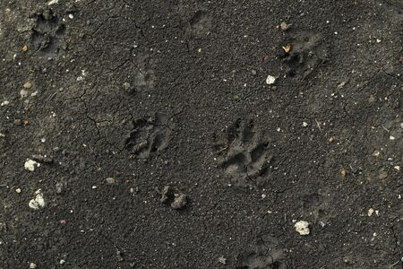 Traces of the animal in the soil. Dogs get their feet dirty for a walk. Background