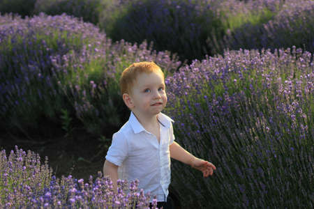 Lifestyle photo shoot in nature. Little kid boy enjoy a stroll through the fresh air and scent on a lavender field in the sunset sun. Selective focus.