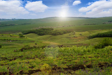 Green hilly field on a sunny summer day. Toned background.