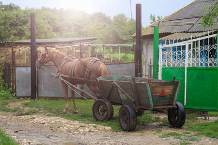 Harnessed horse to the cart. Animal-drawn transport on a rural background, toned.