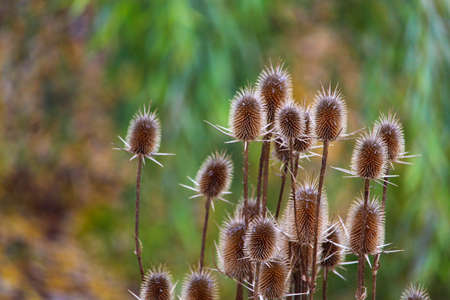 Wild thorny plants on blurred green nature background