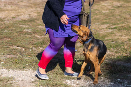 Background with a dog on a leash without a muzzle. Selective focus Imagens