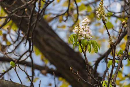 Repeated flowering of chestnut in late autumn. Natural anomalies and deviations from the norm in the northern hemisphere. Global warming and climate change. Background