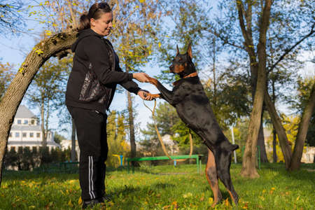 A young woman on a walk with a Doberman is enjoying talking with a pet. Selective focus with blurred background. Shallow depth of field.