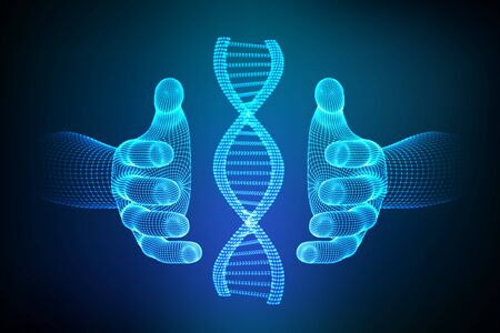 DNA sequence in hands. Wireframe DNA molecules structure mesh. DNA code editable template. Science and Technology concept. Vector illustration 写真素材 - 126506188