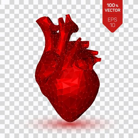 Heart. Low poly human heart. Abstract anatomy organ. Medicine concept. 3D isolated polygonal vector illustration