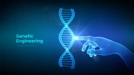 Hand touching DNA sequence molecules structure mesh. Wireframe DNA code editable template. Genetic engineering. Medical research. Science and Technology concept. Vector illustration