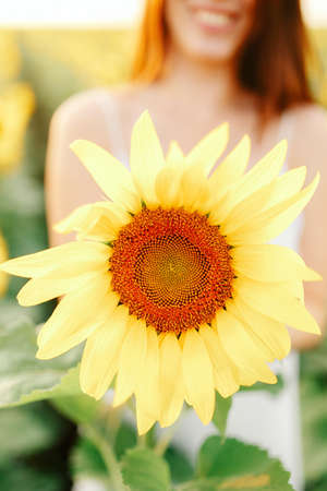 Young girl in a white dress walks in the field of sunflowers Stock Photo