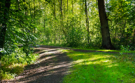 Gravel road through sunny green Forest illuminated by sunbeams. Beautiful forest with bright sun shining through the trees