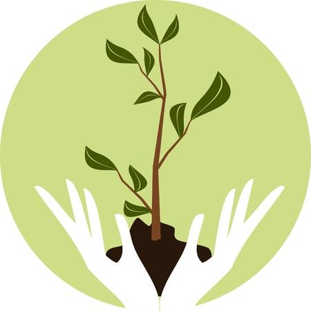Illustratie van de menselijke handen die een jonge groene plant.