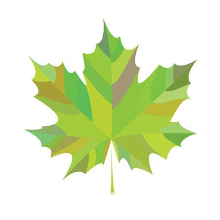 chlorophyll: nature, tree, verte, chlorophyll, background