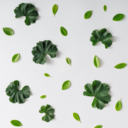 Creative natural pattern background made of leaves. Flat lay.