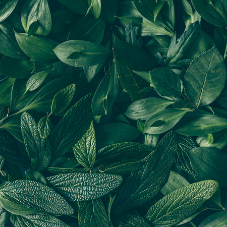 Creative layout made of green leaves. Flat lay. Nature background