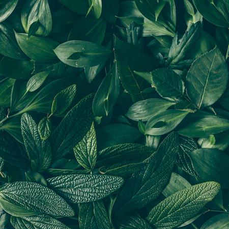 Yeşil yapraklardan oluşan yaratıcı düzen. Düz yatıyordu. Doğa arka plan