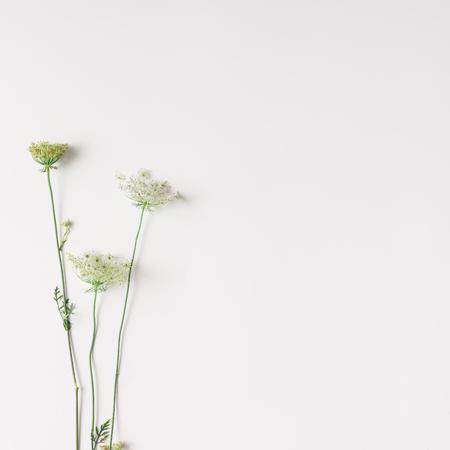 白い花は明るい背景上に配置します。フラットが横たわっていた。