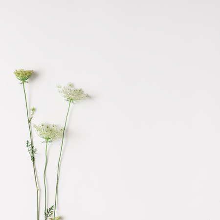 White flowers arranged on bright background. Flat lay.