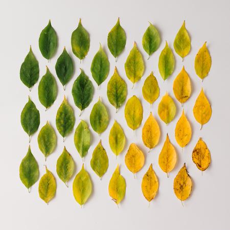 Creatieve lay-out van kleurrijke herfstbladeren. Plat leggen. Seizoen concept.