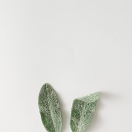 어린 양 귀가 식물 잎으로 만든 토끼 귀. 평평한 평신도.