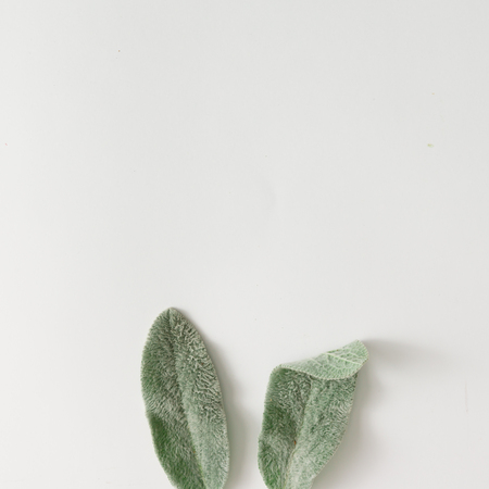 Bunny ears made of lambs ears plant leaves. Flat lay.