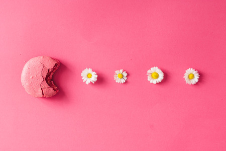 Macaroon with daisies on pink background. Flat lay Imagens - 70796812