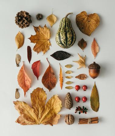 Kreativní přirozené uspořádání z podzimní flóry. Úhledně uspořádané. Ploché leželo.