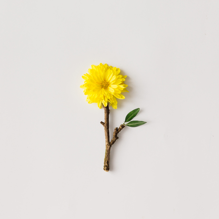 Minimalistic yellow flower made of branch. flat lay. Minimal concept.
