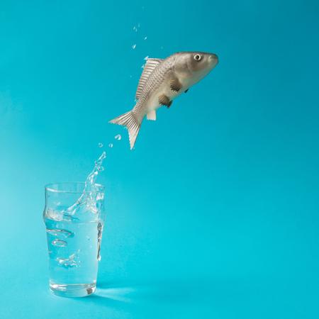 물고기 물 한 잔 밖으로 점프입니다. 크리 에이 티브 최소한의 개념.