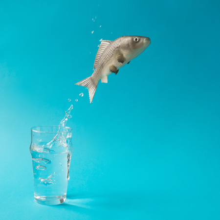 Fish jumping out of glass of water. Creative minimal concept.