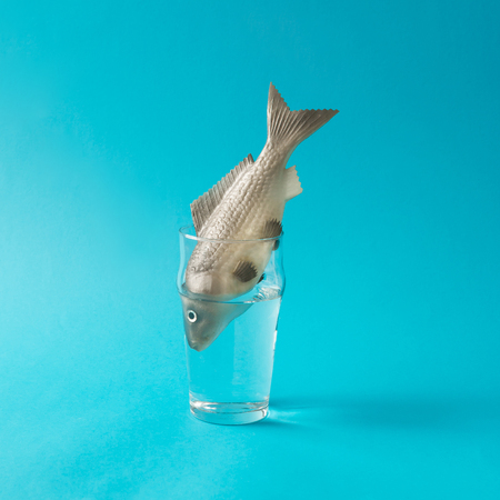 Fish in glass of water. Creative minimal concept.
