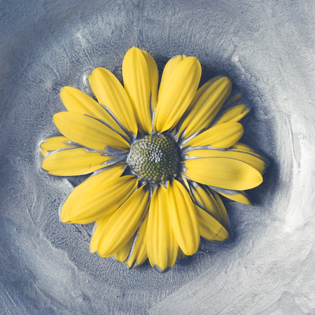 metalic texture: Yellow daisy flower in silver paint. Minimal concept.