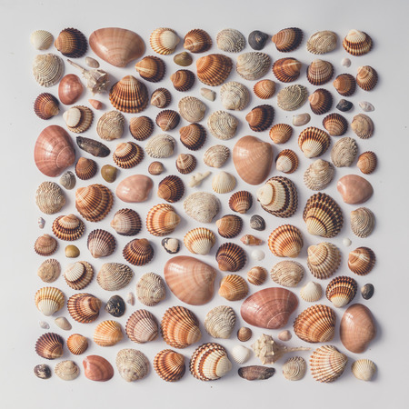 Creative arrangement of sea shells. Flat lay. Imagens - 73511801