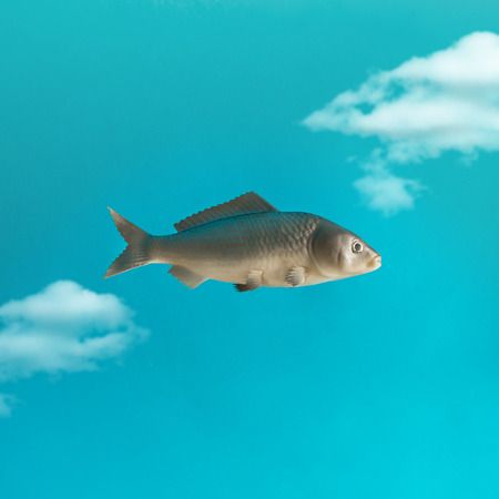 Fish in the sky with clouds. Creative minimal concept. Stock Photo