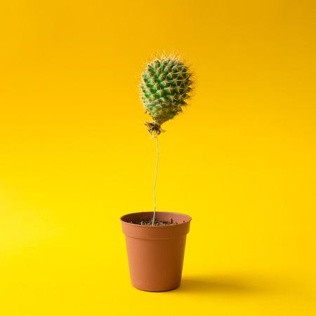 Cactus balloon in a plant pot. Creative minimal concept.