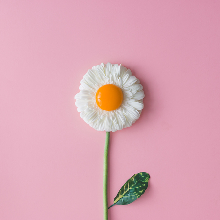 Daisy flower with egg yolk. Minimal concept. Flat lay.